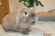 Приглашаем на вязку  кроликов